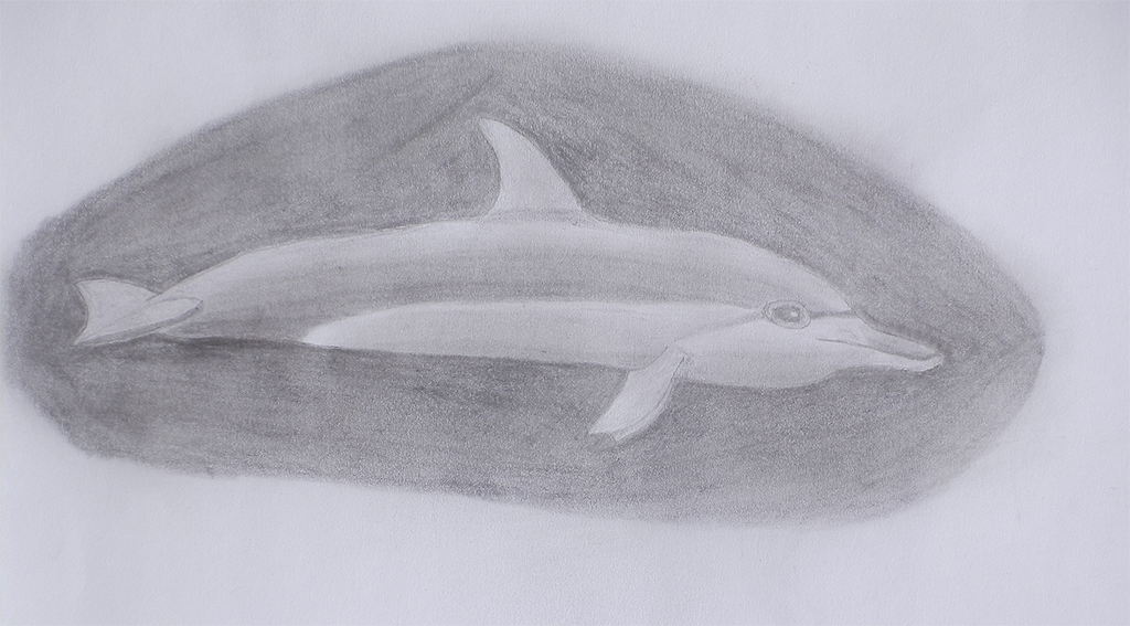 Dolphin drawings pencil